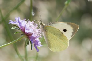 photographie macro papillon